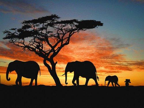 Путешествие плюшевого слонёнка (29 фото)