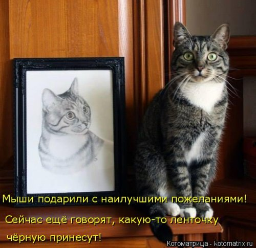 Новая котоматрица для всех (36 фото)