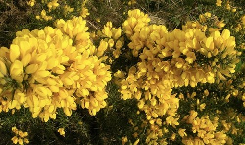 Топ-25: Ужасные и ядовитые растения, которые на самом деле довольно распространены