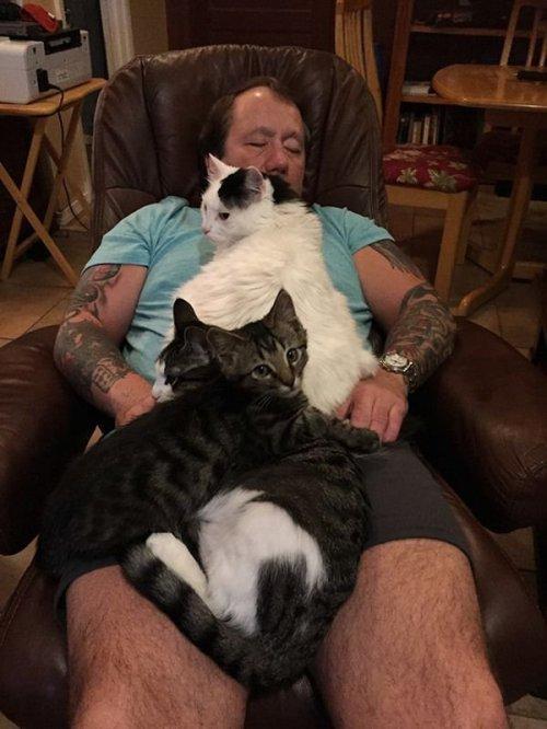Фотоприколы с кошками (17 шт)