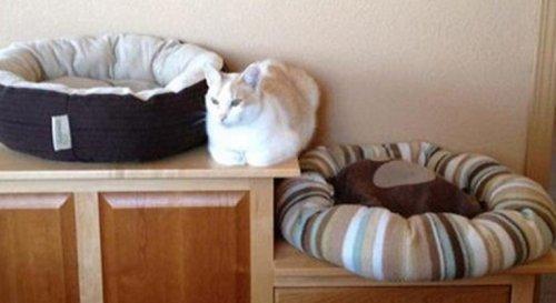 Кошачья логика в прикольных картинках (10 фото)