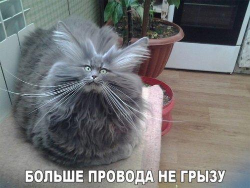 Прикольные картинки с кошками (30 шт)