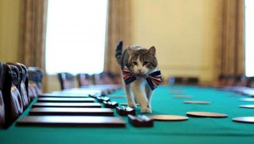 Кот Ларри — главный кот на Даунинг стрит, 10 (8 фото)