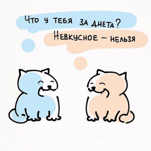 Жизненные принципы кошек (6 фото)