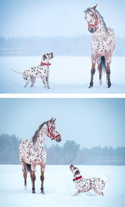 Очаровательные животные как две капли воды (30 фото)
