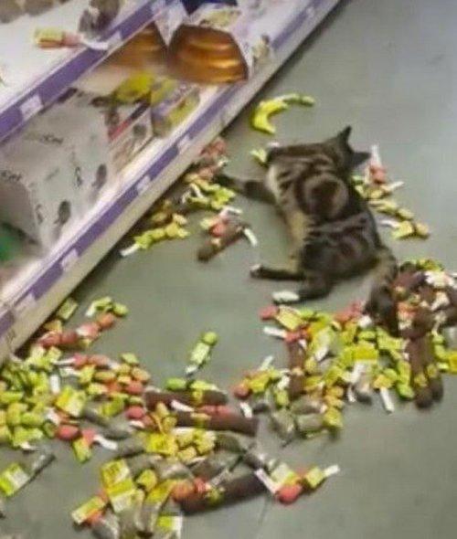 Кошки, перебравшие кошачьей мяты (10 фото)