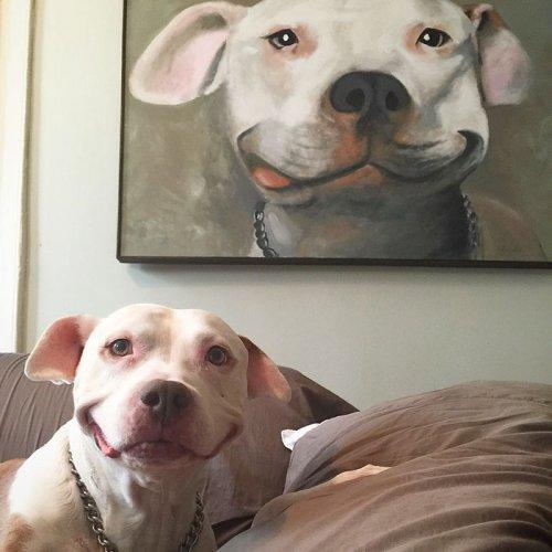 Питбуль Бринкс не перестаёт улыбаться с тех пор, как его подобрали на улице (8 фото)