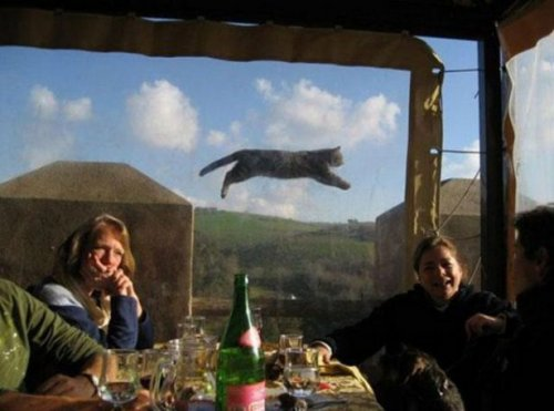 Фотобомбы с животными, которые вас развеселят (17 фото)