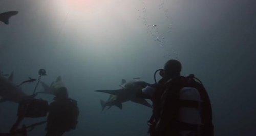 Даже акулам нужна ласка!