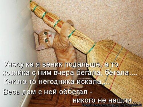 Свежая котоматрица для всех (44 фото)