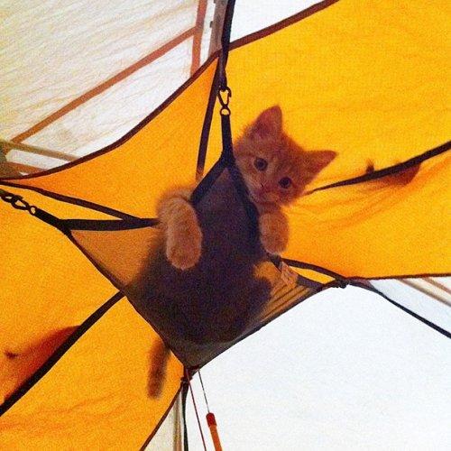 В поход вместе с кошкой (19 фото)