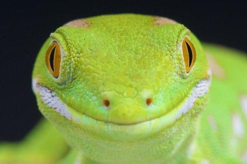 Очаровательные животные, которые вызовут у вас улыбку (18 фото)