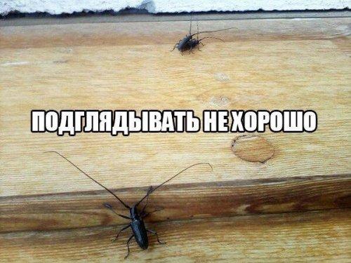 Короткие анекдоты (13 шт)
