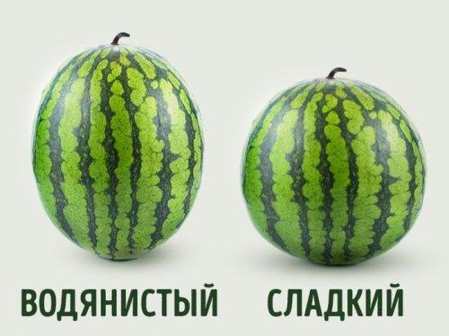 Фото арбузов