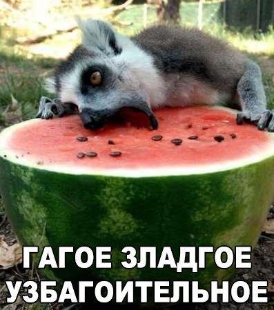 http://www.bugaga.ru/uploads/posts/2016-08/1471006110_fotomemy-8.jpg