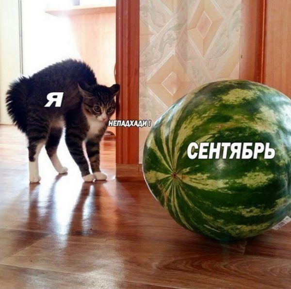 http://www.bugaga.ru/uploads/posts/2016-08/1472073172_rzhaka-3.jpg