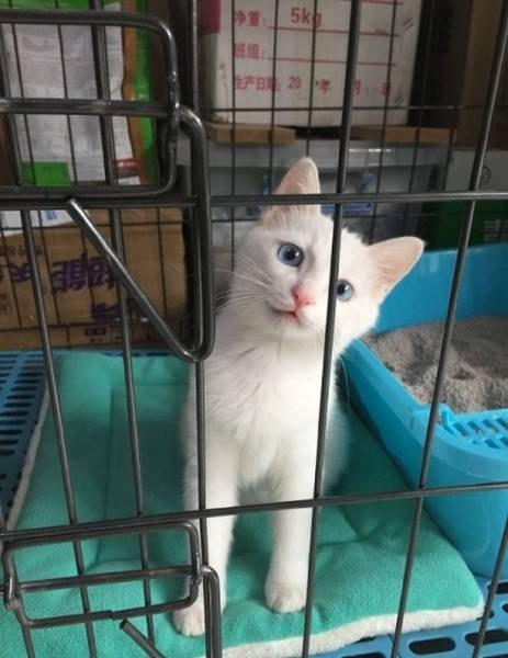 Кошка, которая смогла (5 фото)