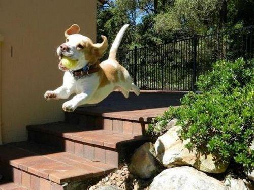 Очень забавные животные (21 фото)