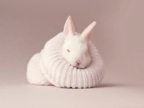 Очаровательная фотосессия для новорождённого кролика (12 фото)