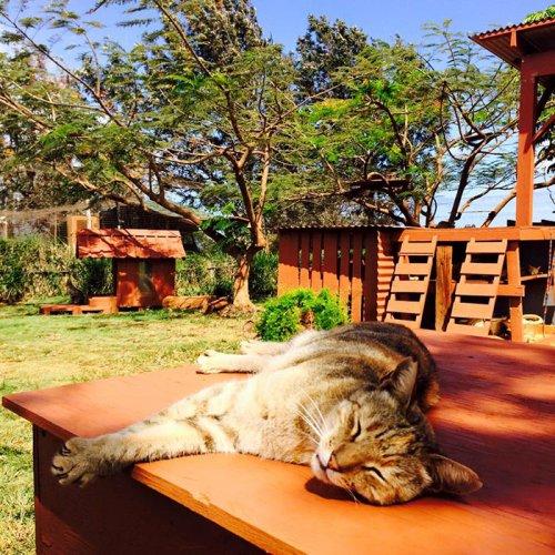 Кошачий приют на гавайском острове Ланаи (11 фото + видео)