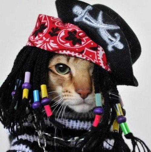 Смешные кошки в костюмах пиратов (10 фото)