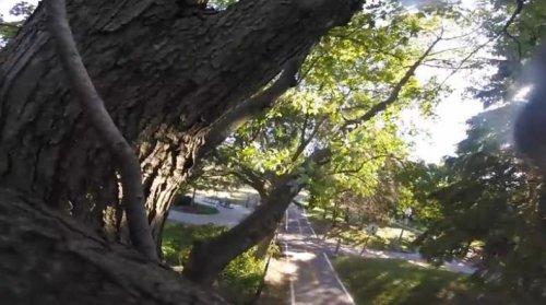 Видео от первого лица, снятого белкой на камеру GoPro