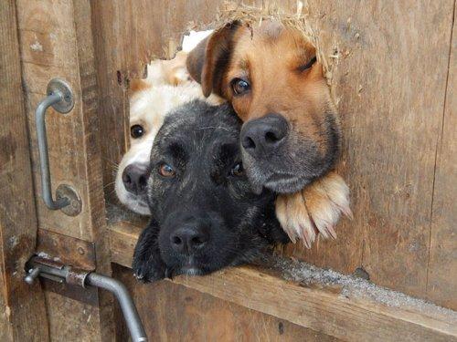 Отчаянные собаки, которые жаждут поздороваться (24 фото)