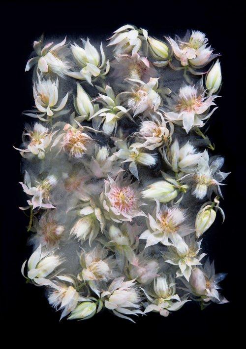 Цветы во льду (12 фото)