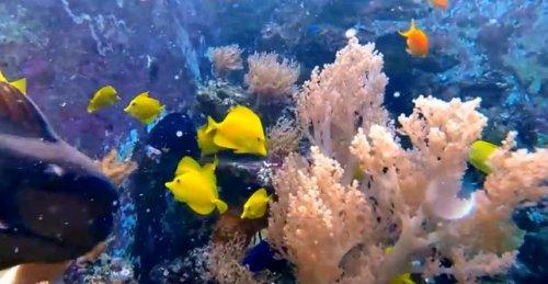 Самый большой в мире домашний аквариум объёмом 30.000 литров
