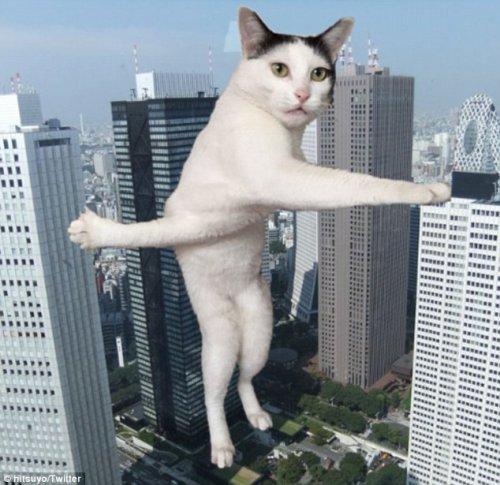 Забавная кошка Милк-чан на перепутье и фотожабы на неё (7 фото)