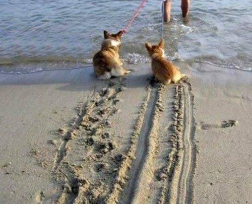 Собаки – на пляже валяки (10 фото)