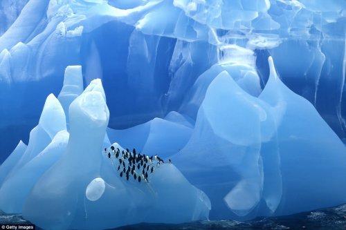 Завораживающие фотографии айсбергов (19 шт)