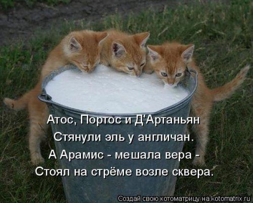 Новая котоматрица (17 шт)
