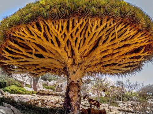 Самые живописные деревья (27 фото)