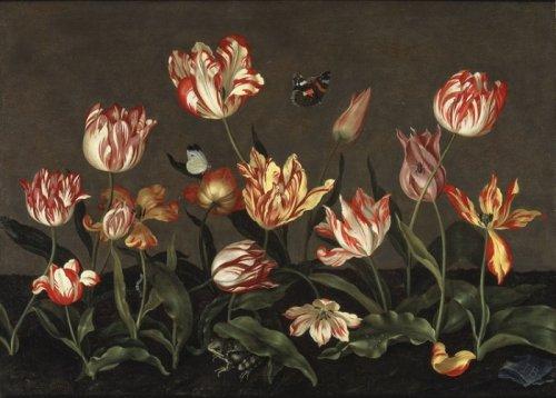 Semper Augustus: Самый редкий и дорогой сорт тюльпанов (6 фото)