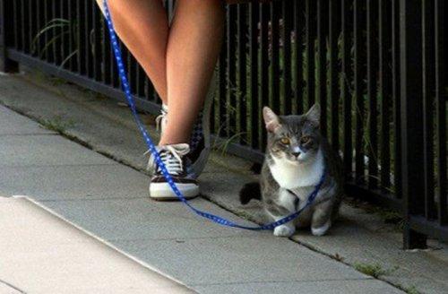 Кошки, которые мечтают стать собаками (10 фото)