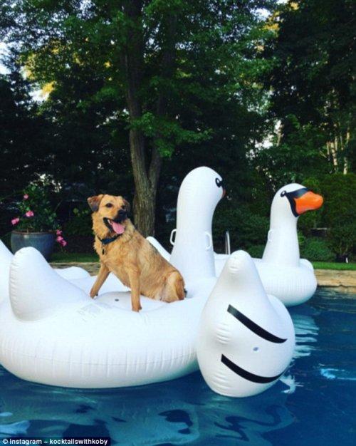 Собаки, которые знают толк в летнем отдыхе (23 фото)