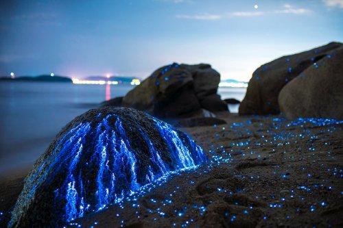 Светящаяся вода на побережье Японии (6 фото)