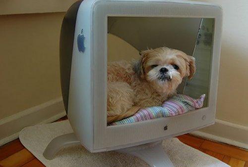 Креативные владельцы собак, которые делают для своих питомцев оригинальные вещи (27 фото)