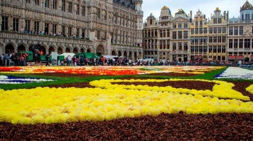 Гигантский ковёр из бегоний на центральной площади Брюсселя (21 фото)