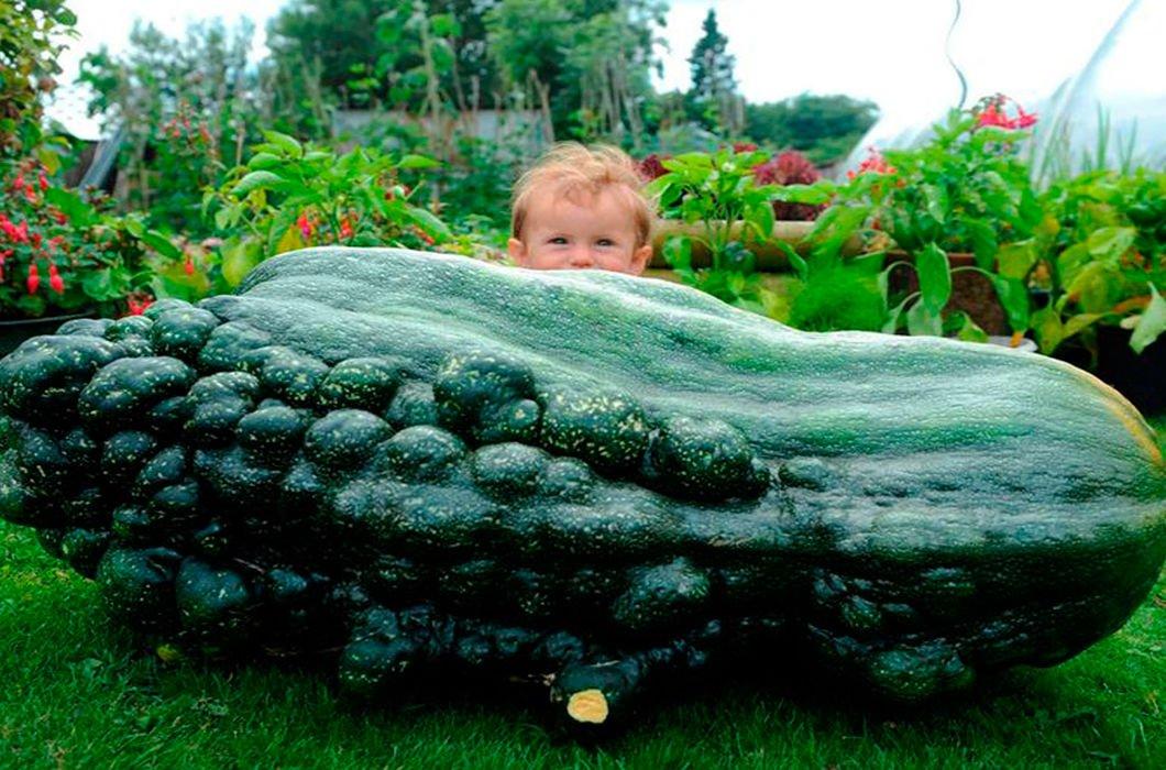 Картинки самые большие овощи и фрукты в мире