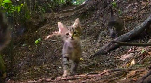 Прогулка по парку закончилась счастливым спасением котят