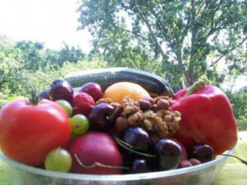 Топ-25: Неожиданные факты про вегетарианство, которые вы могли не знать