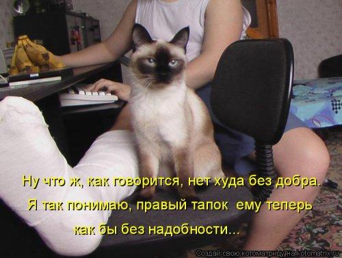 Новая котоматрица (33 фото)