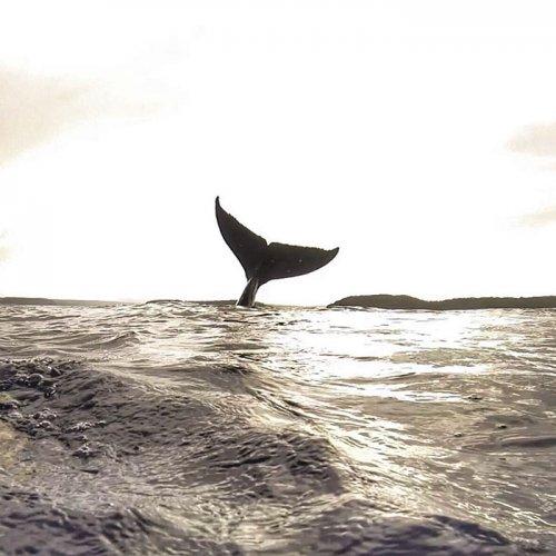 Селфи парня, которого фотобомбит кит, покоряет Интернет (6 фото)