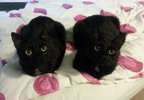 Забавные кошки, которых легко перепутать с Беззубиком (27 фото)