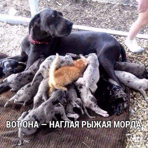 http://www.bugaga.ru/uploads/posts/2016-09/thumbs/1473420424_kartinki-22.jpg