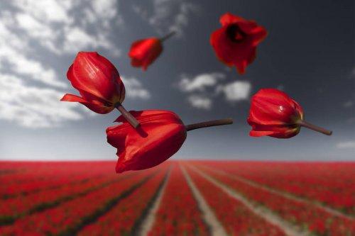 Цветы, парящие в невесомости, в фотографиях Клэр Дропперт (9 фото)