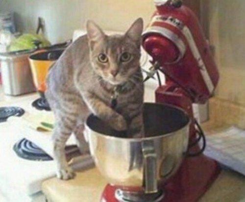 Кошки, застигнутые врасплох (10 фото)