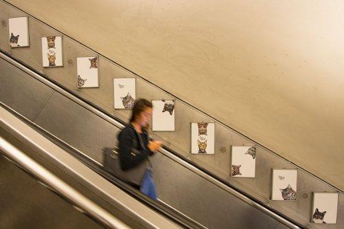 Всю рекламу на станции лондонского метро заменили фотографиями кошек (9 фото)